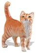 Safari Orange Tabby Cat Model Toy, Cat toy, Cat model, kids plastic Cat  replica, wild safari animal