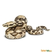 Wild Safari Boa Constrictor Toy Model