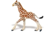 Reticulated Giraffe Baby, Safari Jungle Reticulated Giraffe Baby, Wild Safari Giraffe Baby, Giraffe