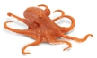 Wild Safari Sea Life Octopus Toy Model