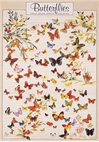 Butterflies Poster Laminated