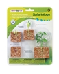 Plastic Model Growing Plant Cycle | Green Bean