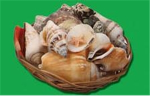 Seashells in a Basket- Small