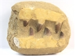 Ugly Box: Dinosaur Fossil Mosasaur Jaw Teeth in Matrix