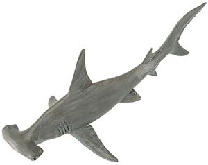 Wild Safari Hammerhead Shark Model Toy