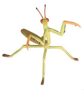 Hidden Kingdom Praying Mantis Insect Toy Model, praying mantis replica toy, safari praying mantis