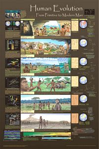 Human Evolution Poster - Laminated