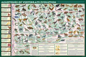 Milestones of Vertebrate Evolution (Laminated)