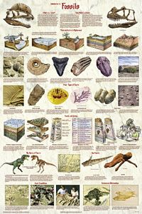 Introduction to Fossils Poster (Laminated)