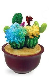 Magic Growing Cactus