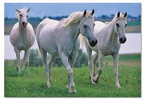 Melissa and Doug 100 Piece Three White Stallions Jigsaw Puzzle, horse puzzles, kids horse puzzle