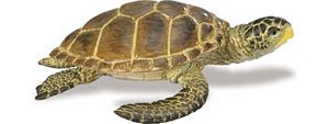 Wild Safari Sealife Loggerhead Turtle Toy Model