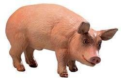 Safari Farm Boar, boar toy, pig toy, male pig ty, pig replica, pig model, kids wild safari boar mode