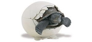 Incredible Creatures Safari Galapagos Tortoise Hatchling Toy Model