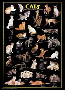 Cats Laminated Poster