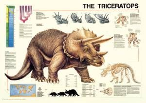 The Triceratops Poster-Laminated Rolled and Sleeved