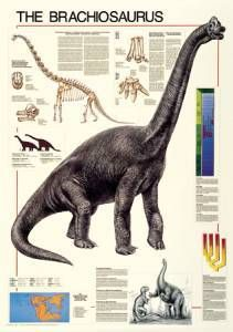 The Brachiosaurus Poster-Laminated Rolled and Sleeved