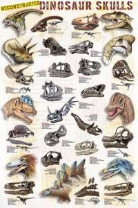 Dinosaur Skulls Poster-Laminated Rolled and Sleeved