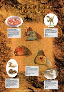 Ancient Dinosaur Discoveries Poster (Laminated)