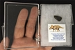 Authentic Fossilized Triceratops Shed Teeth - Boxed