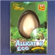 Alligator Growing Egg