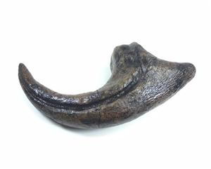 Allosaurus Fragilis Claw Replica