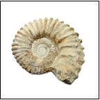 Fossils - Fossils for kids - Fossil Collections
