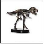 Dinostoreus Finished Models / Dinosaur Skeleton Replicas