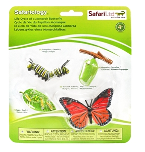 Life Cylce of a Monarch Butterfly Toy Replica Model