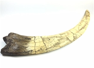 Therinzinosaurus Claw Replica, Therinzinosaurus dinosaur claw model, Therinzinosaurus dinosaur claw